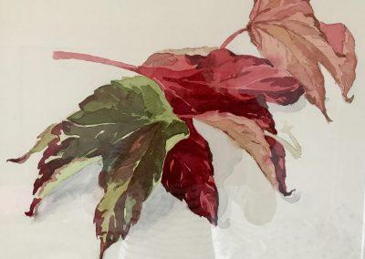 Watercolour Workshop, Autumn Colours, Sat 30 Oct 2021 with Frances Douglas, £95
